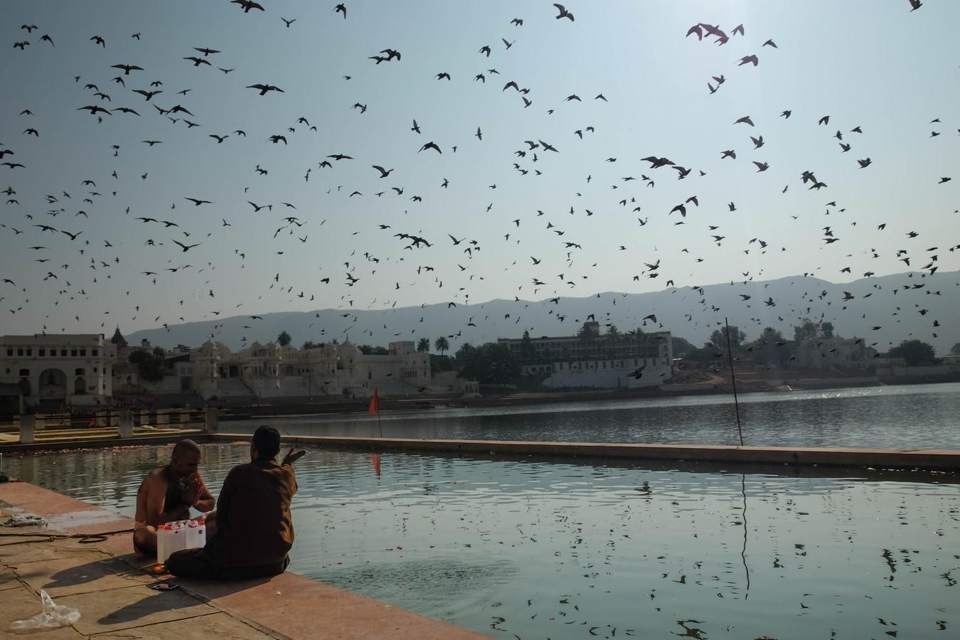 Puja et pigeons à Pushkar