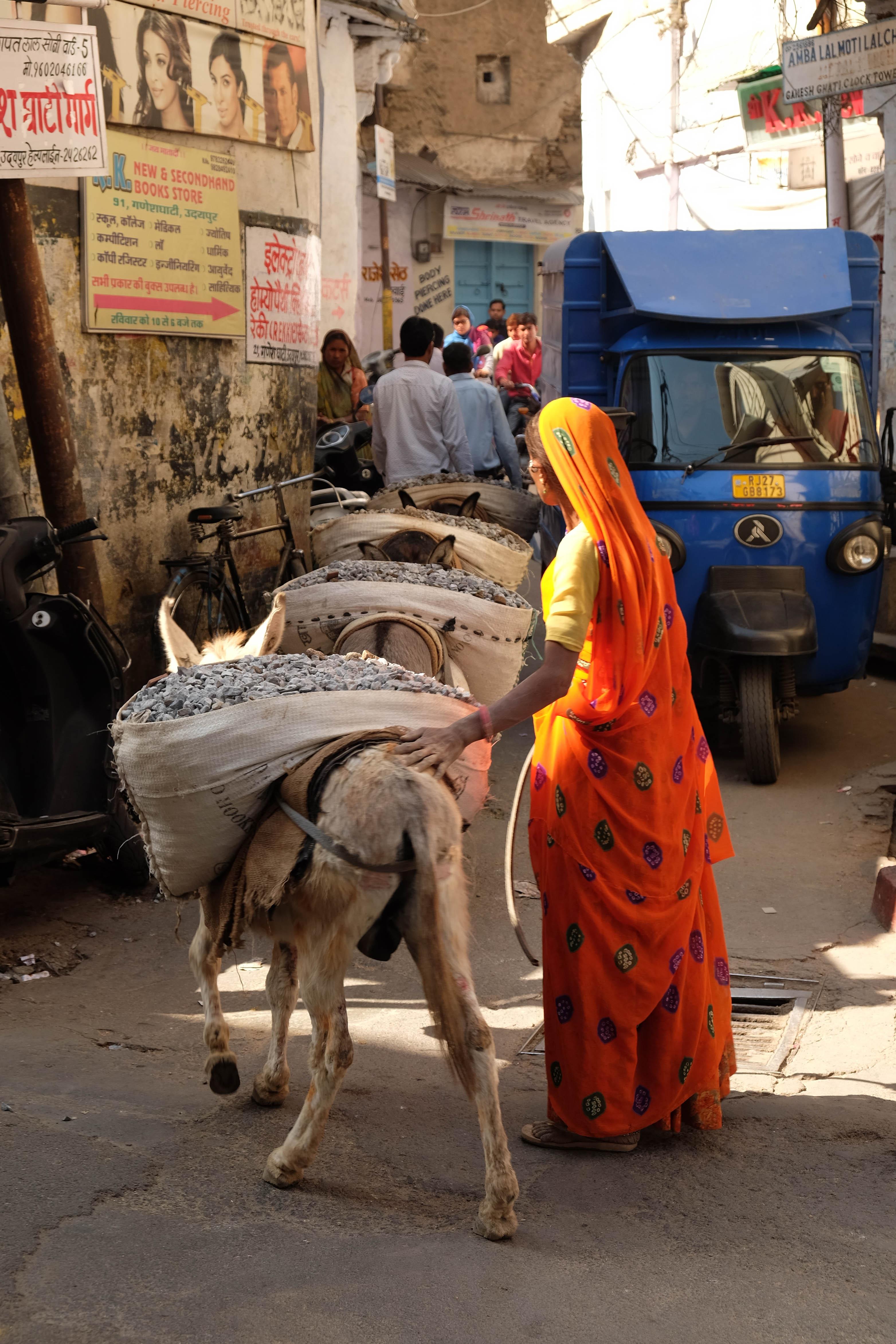 Femme en sari promenant ses ânes à Udaipur