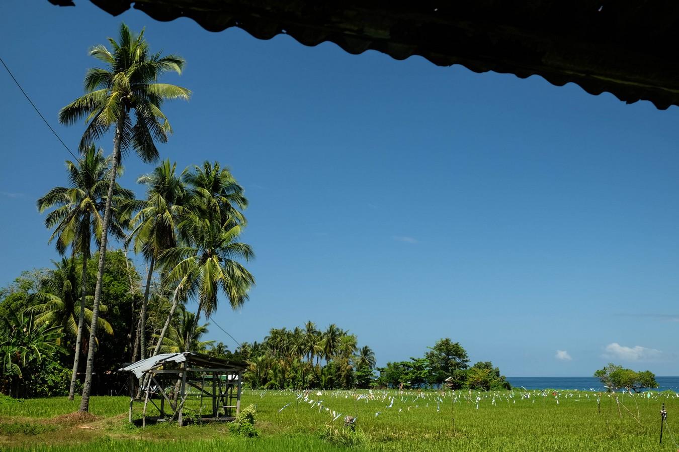 Photo du vert tendre des rizières de Camiguin tranchant avec le bleu du ciel et de la mer.