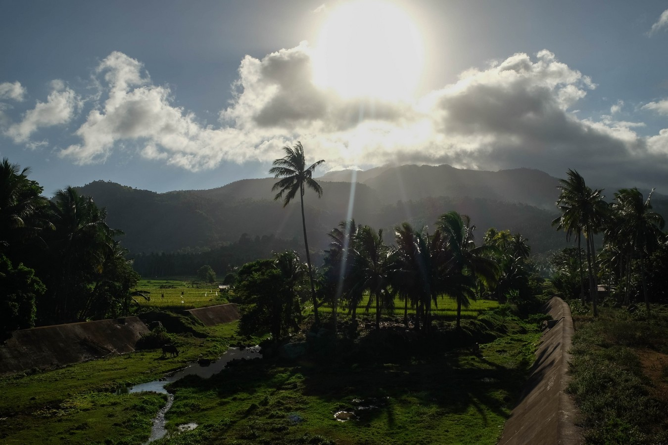 Vue des rizières de Camiguin aux Philippines avant le coucher de soleil.