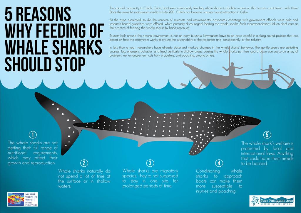 Pourquoi est-il nécessaire d'arrêter de nourrir les requins-baleines et d'arrêter d'aller à Oslob.