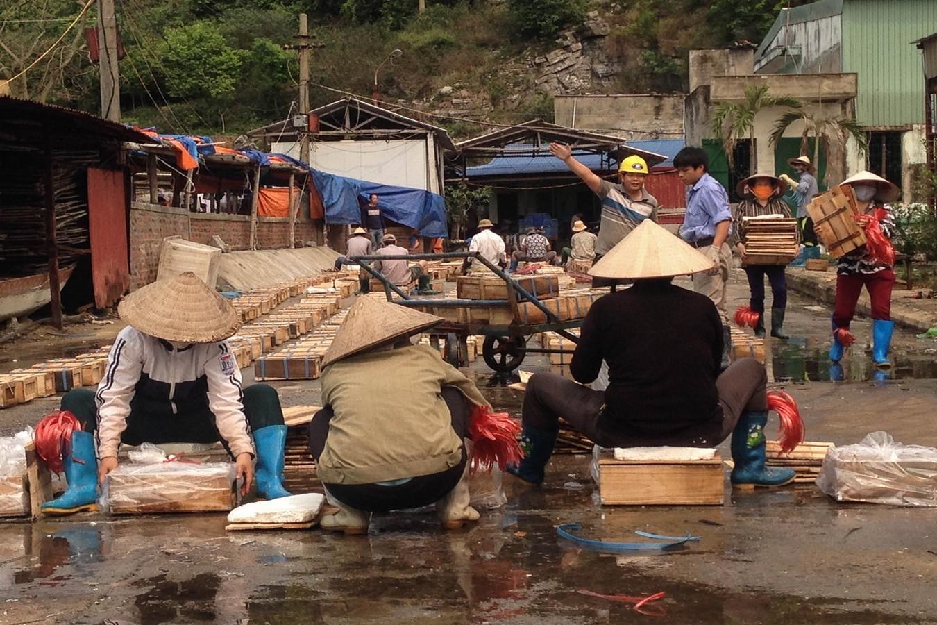 Pêcheurs d'huître à Cat Ba