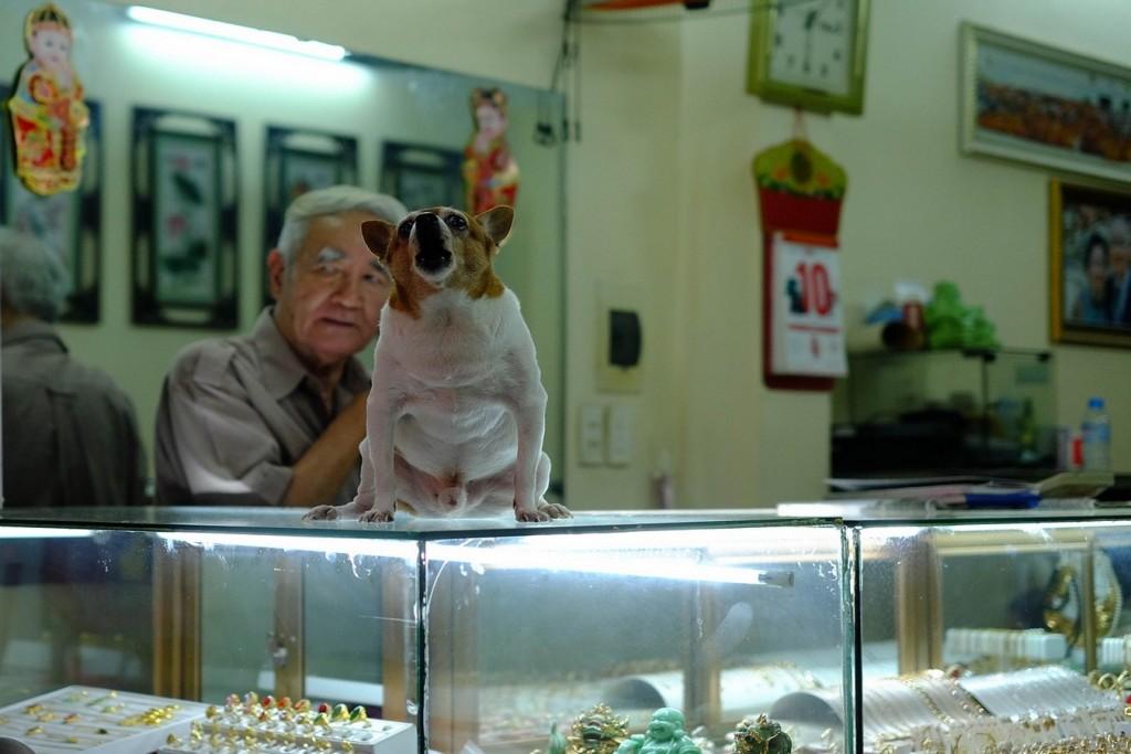 Petit chien sur une vitrine à Hanoi