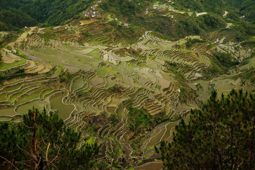 Vue sur les rizières de Maligcong
