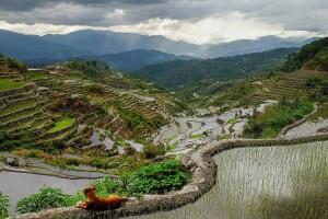 Les rizières de Maligcong aux Philippines.