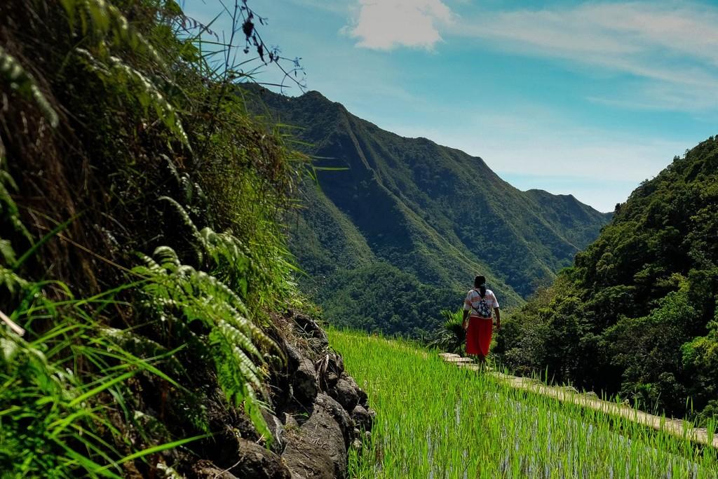 Femme Ifugao dans les rizières