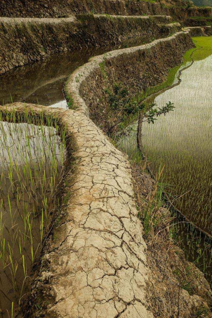 Le sentier escarpé emprunté lors du trek à Banaue dans la Cordillera aux Philippines.