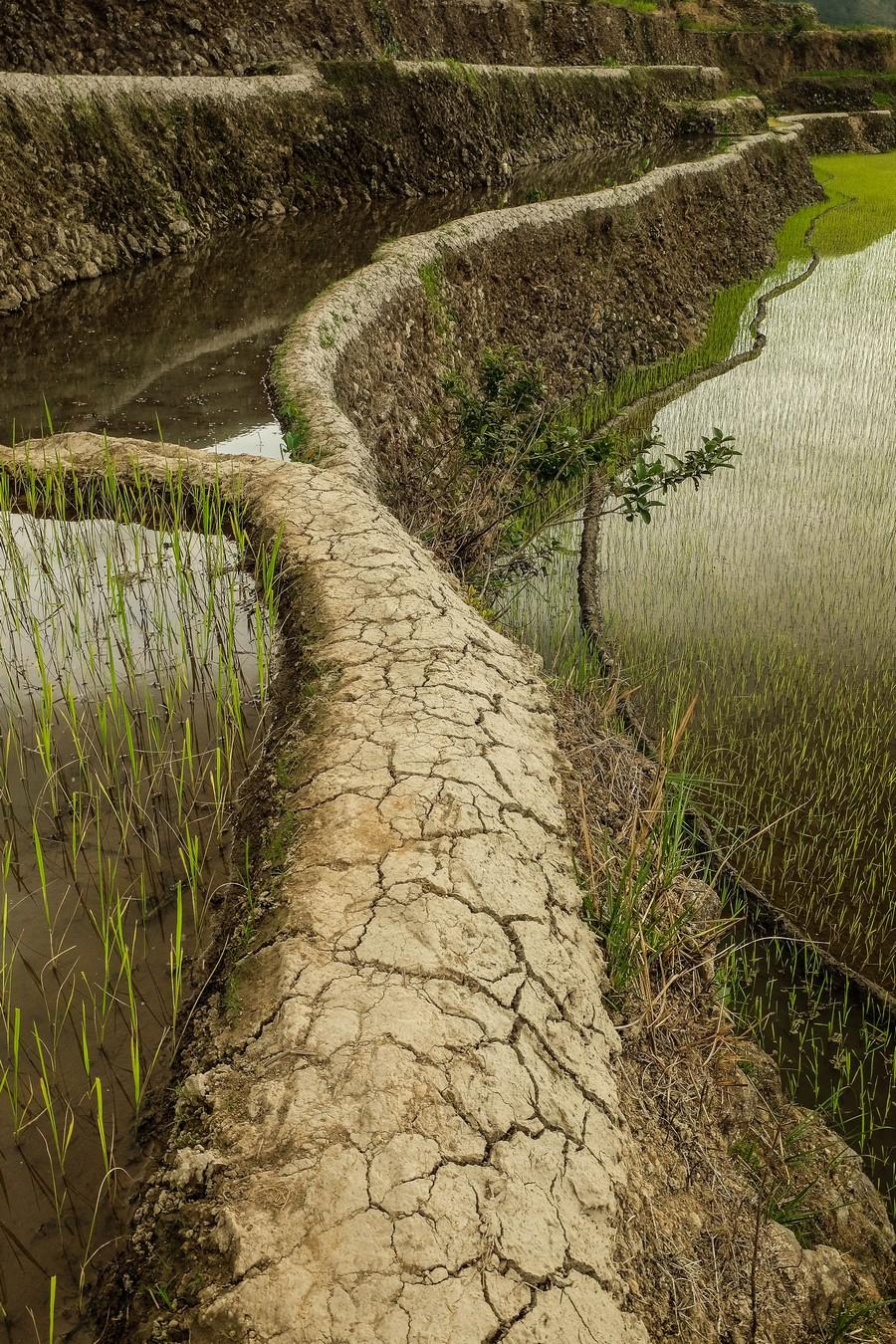 Le sentier escarpé emprunté lors du trek à Banaue