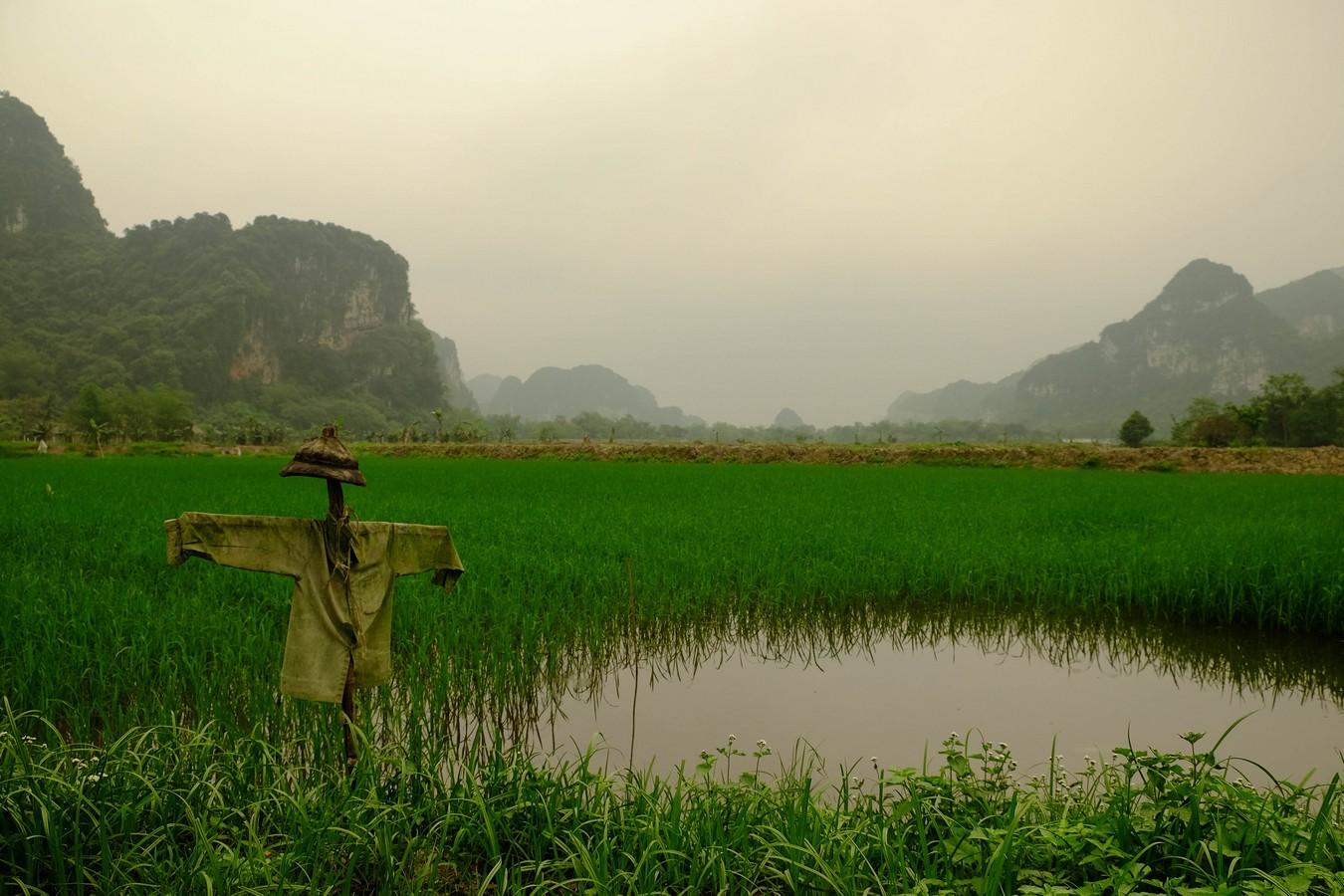 Epouvantail de rizière à Tam Coc