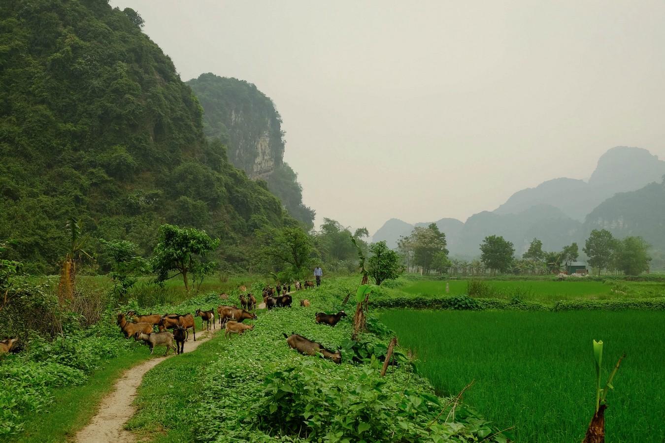 La baie d'Halong terrestre à Tam Coc
