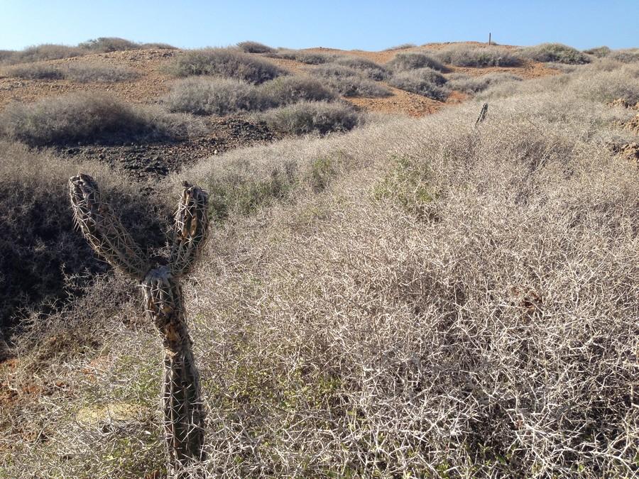La végétation sèche de Cabo de la Vela dans le désert de la Guajira en Colombie