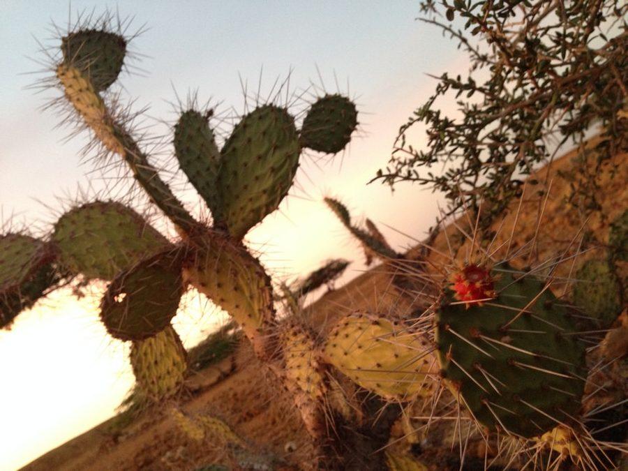 Fleur de cactus. 100 Pied-A-Terre vous explique comment visiter la Guajira en Colombie.