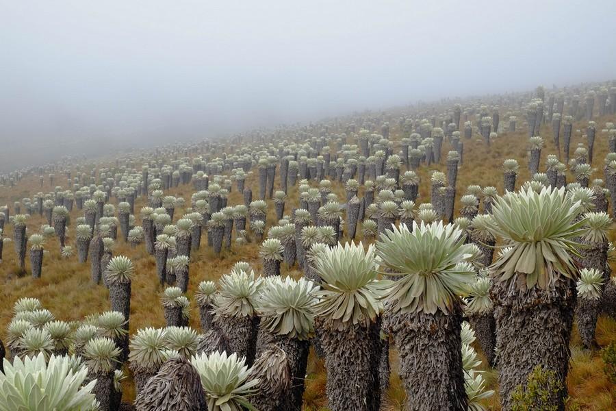 Paysage unique du trek sur le Paramo de Oceta en Colombie