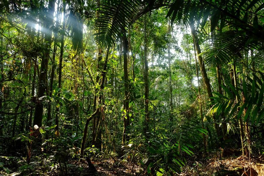 Jungle de la réserve de Cuyabeno en Amazonie en Equateur.