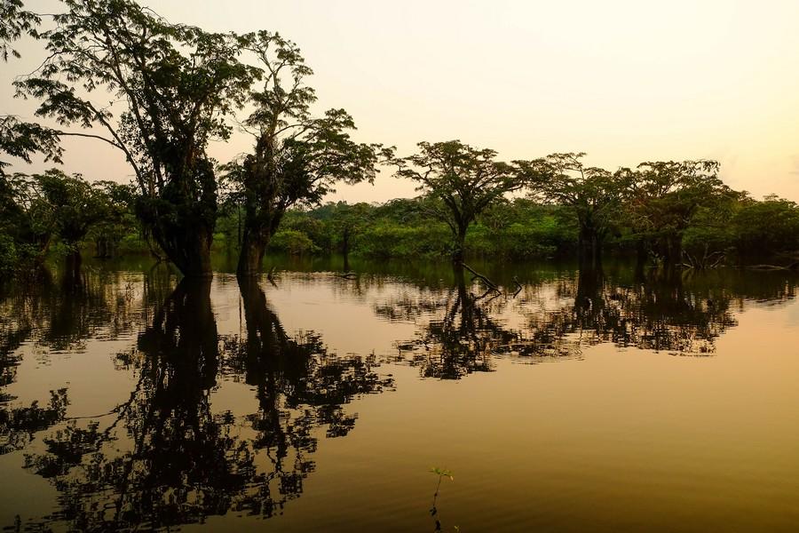 Lever de soleil sur la réserve de la réserve de Cuyabeno en Amazonie en Equateur.