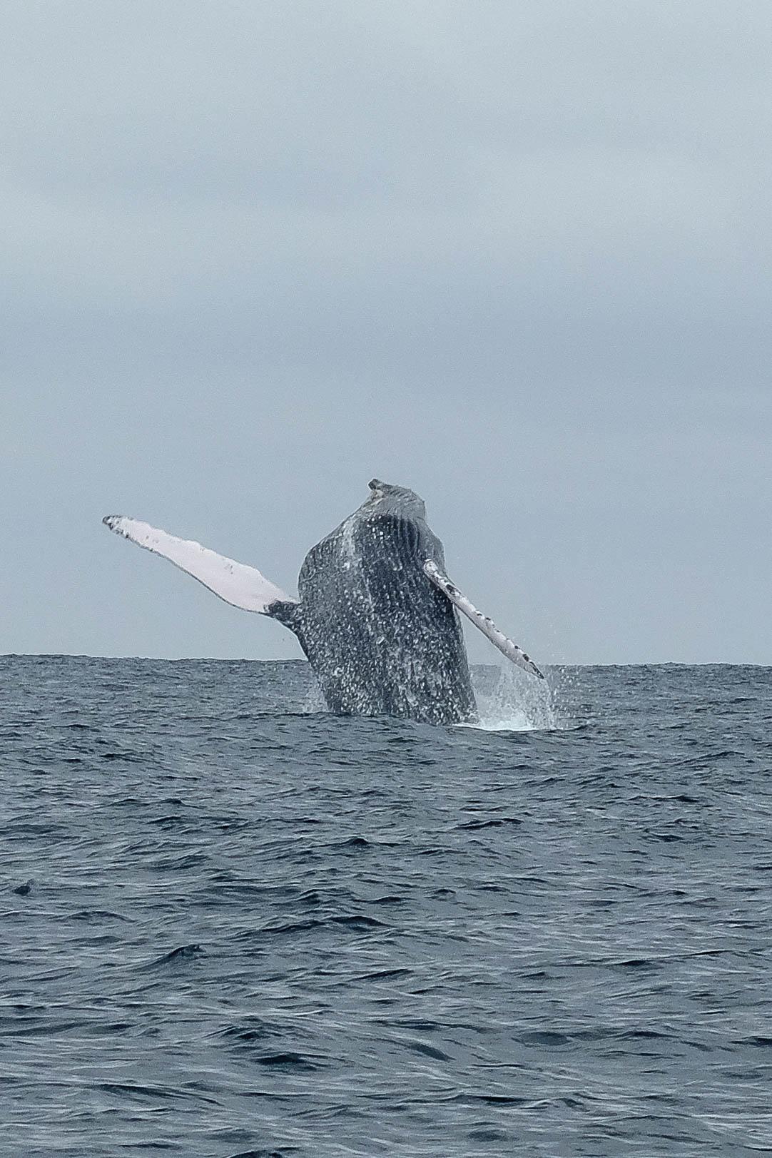 equateur-saut-baleine
