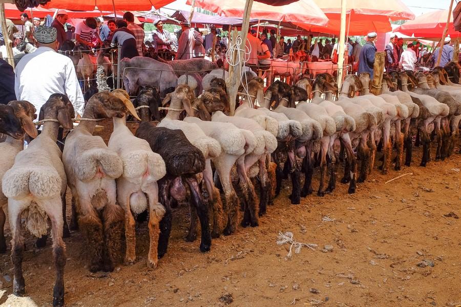 Marché aux animaux Ouïghour dans l'Ouest de la Chine