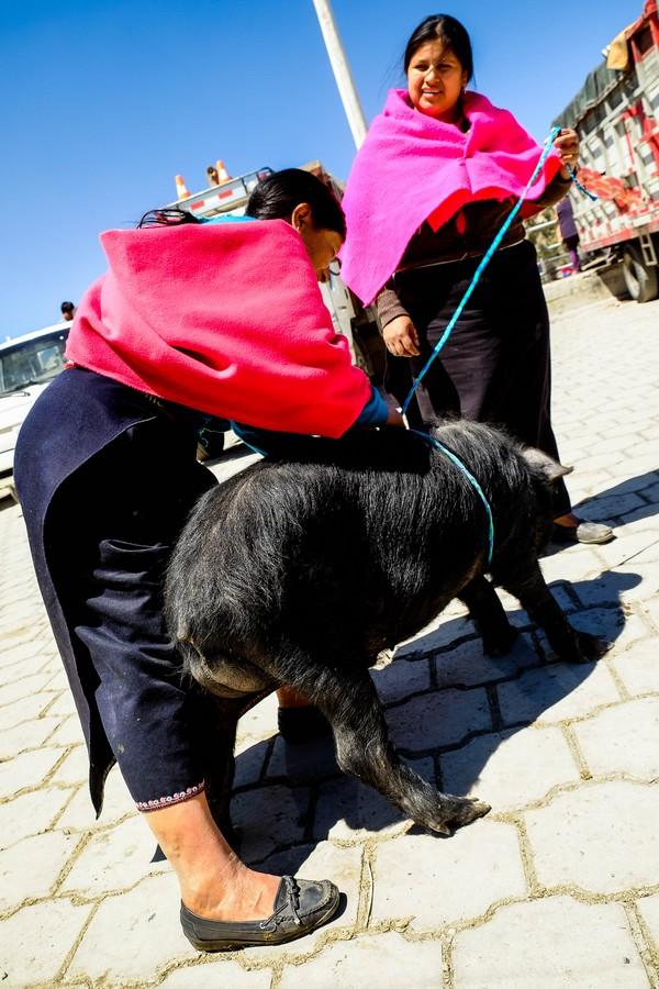 marche-animaux-guamote