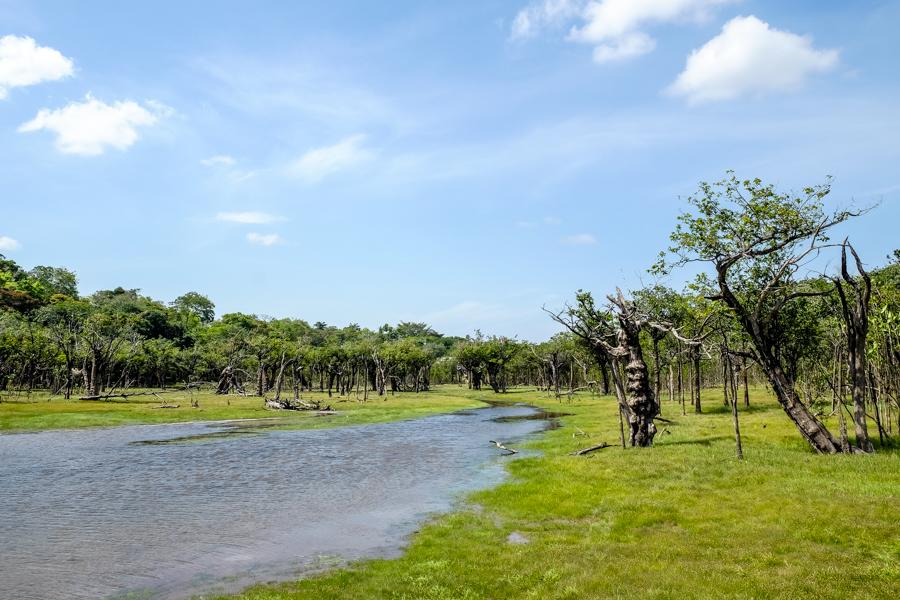 Paysage de rivière à Alter do Chão, Amazonie, Brésil.