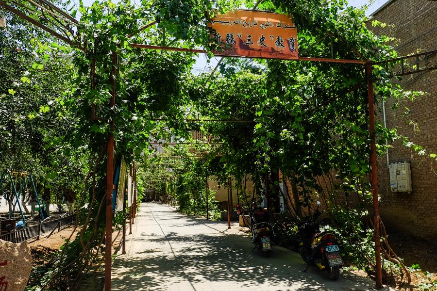 Rue ombragée d'une pergola et de vigne, Turpan, Chine.