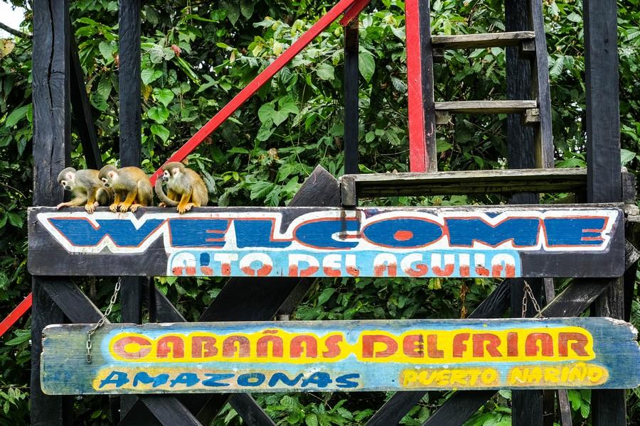 Le panneau à l'entrée et les singes qui vous accueillent. Puerto Nariño, Colombie.