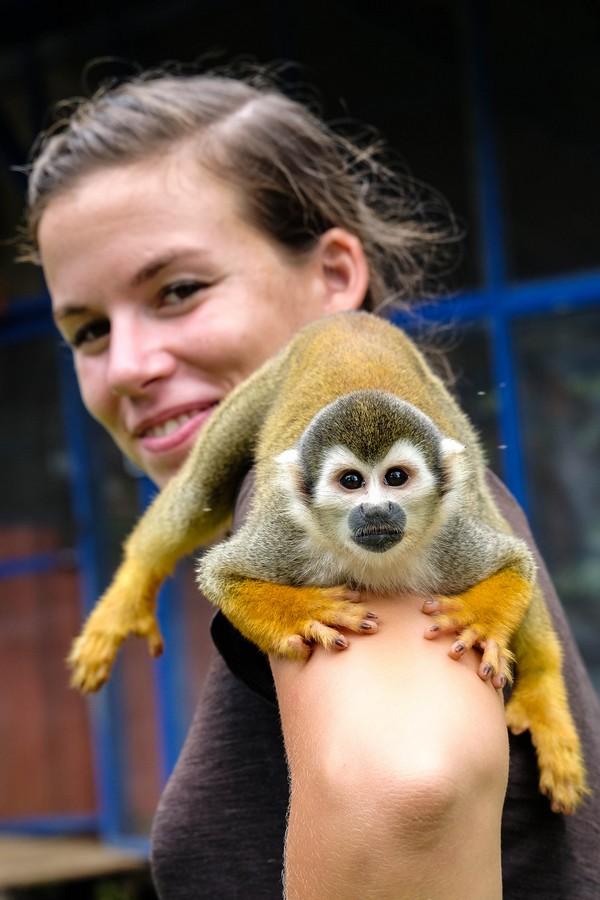 Les petits singe fraile ne sont pas timides. Puerto Nariño, Colombie.