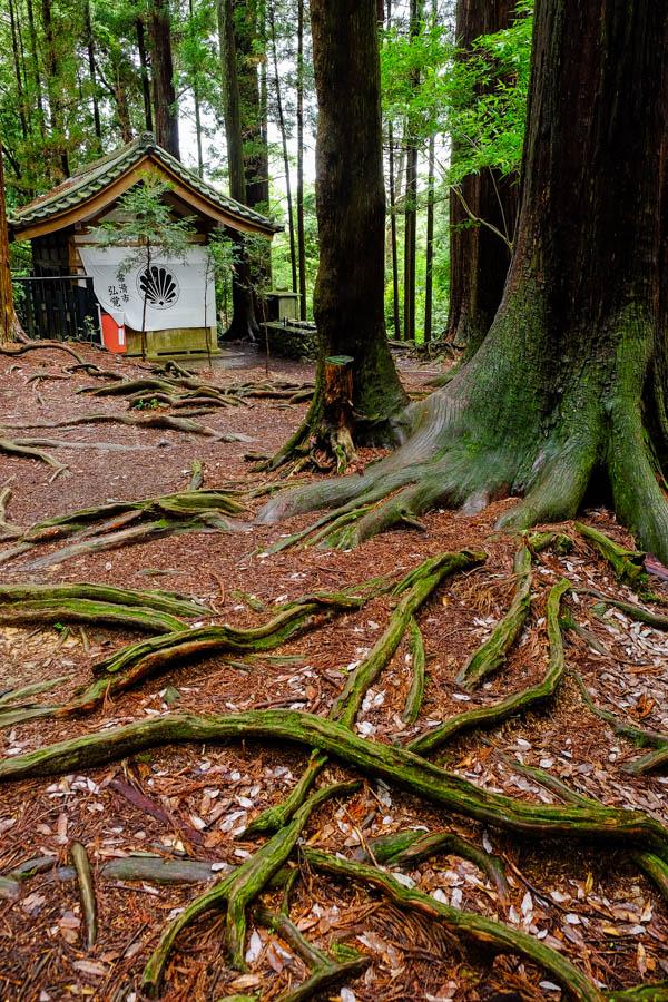 Forêt du mont Kurama, Japon.