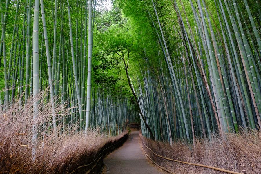 Forêt de bambou d'Arashiyama, Kyoto, Japon.