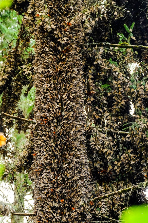 mexique-arbre-piedra-herrada
