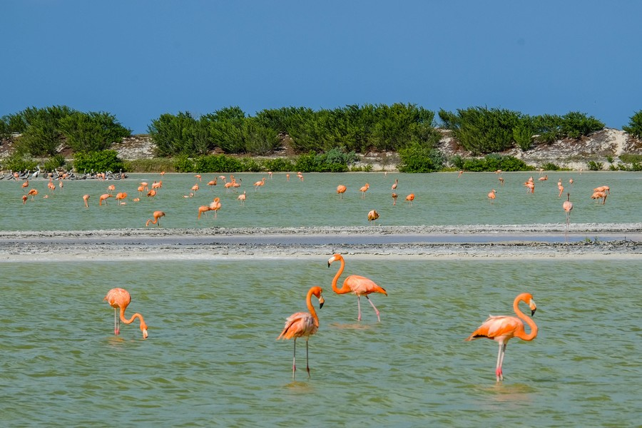 Les flamands roses de Las Coloradas, Mexique.