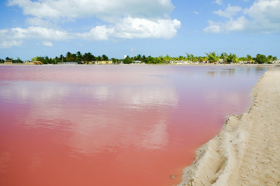 Lagune rose, Las Coloradas, Yucatan.