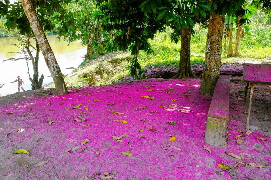 Fleurs colorées dans la communauté de Santa Rosa au Pérou.