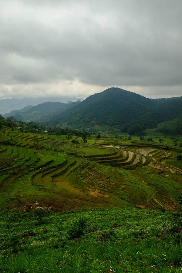 Rizières autour de Bac Ha, Vietnam.