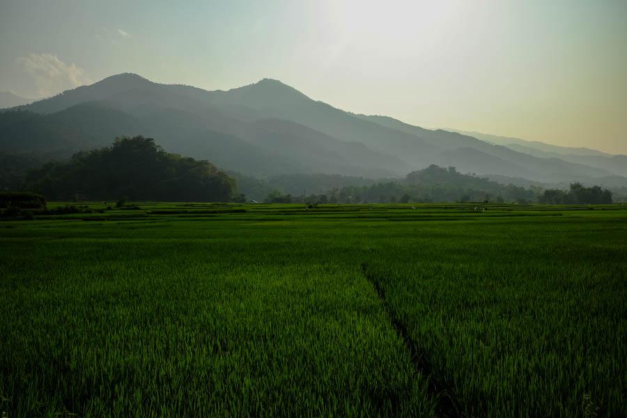 Rizières près d'Ha Giang, Vietnam.