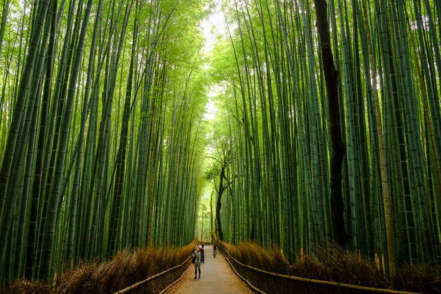 Arashiyama, la forêt de bambou à Kyoto au Japon.