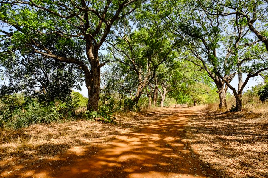 Sur les pistes ombragées près de Banfora au Burkina Faso.