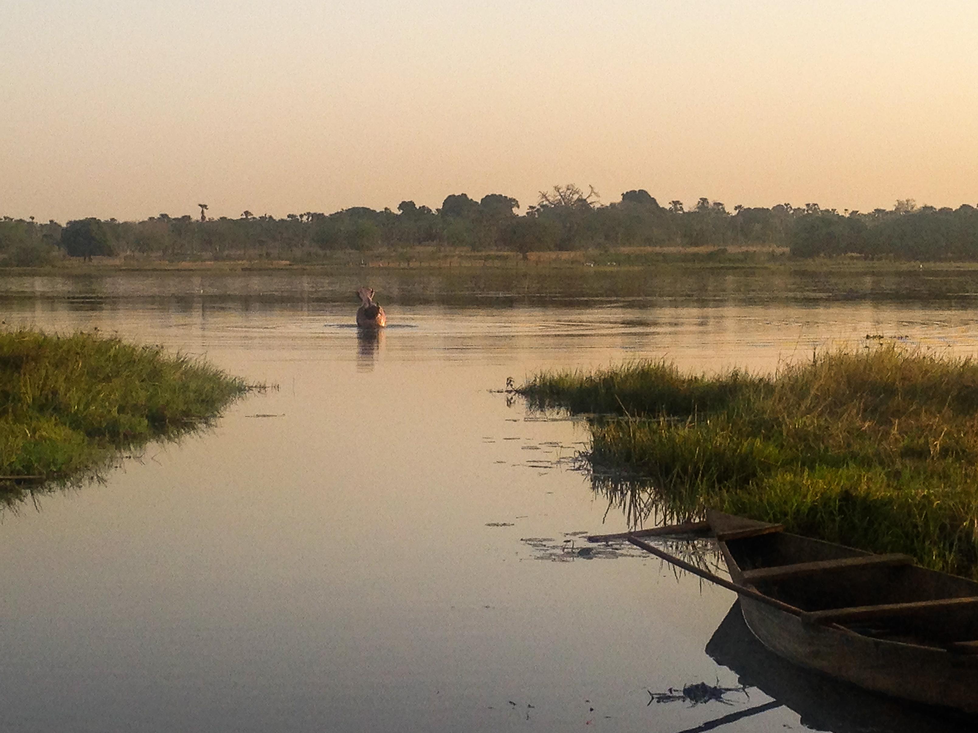 Hippopotame au lac de Tengrela, Burkina Faso.