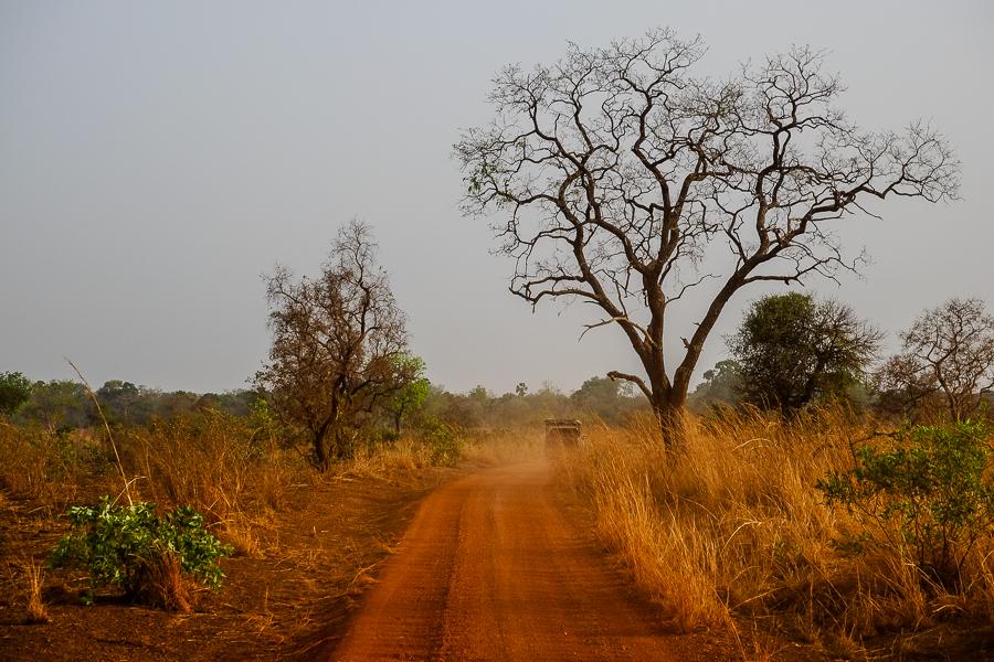Piste de latérite dans le parc de la Pendjari, au Bénin.