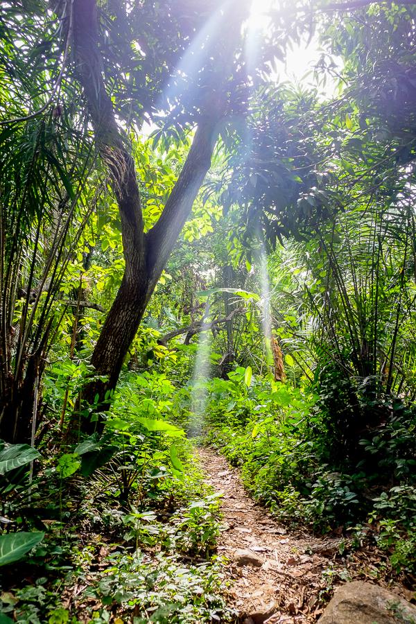 Rayon de soleil dans la jungle de Kpalime, au Togo.