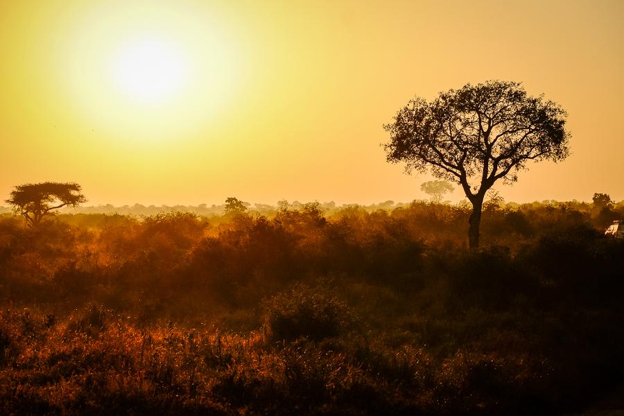 Savane dans le parc Kruger en Afrique du sud.