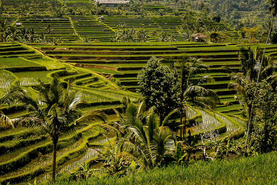 Rizières de Jatiluwih, Bali.