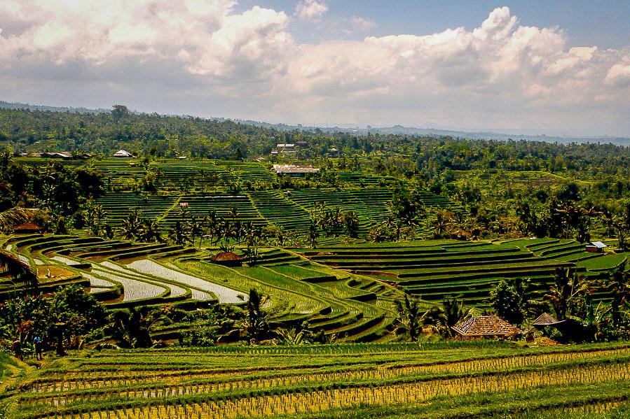 Rizières classées à l'Unesco de Jatiluwih, Bali.