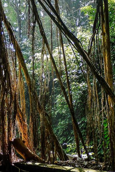 Jungle près d'Ubud, Bali.