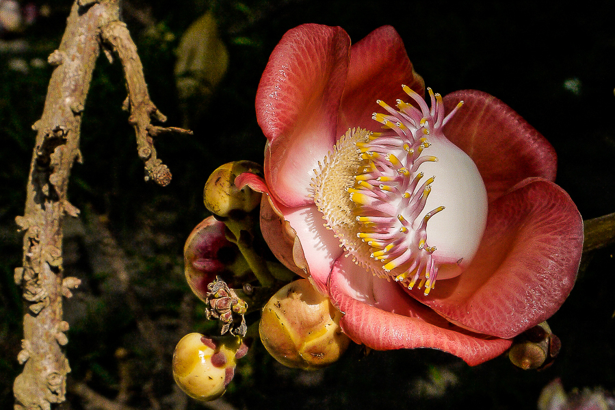 Fleur dans un temple d'Indonésie.