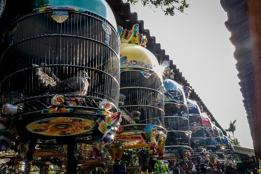 Marché aux oiseaux à Yogyakarta, Indonésie.