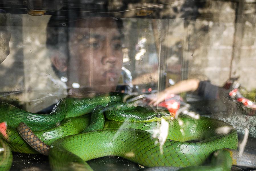 Serpent sur le marché aux oiseaux de Yogyakarta, Indonésie.