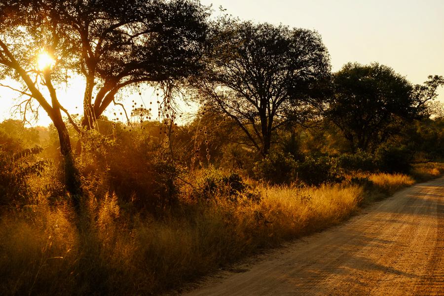 Piste ensoleillée au parc Kruger, Afrique du Sud.