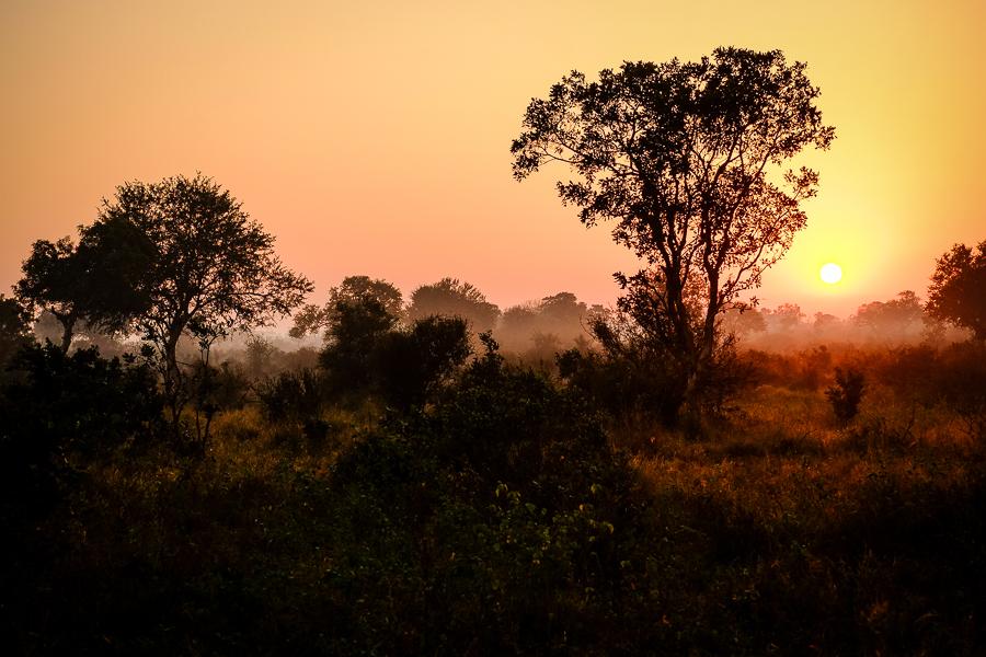 L'aurore au parc Kruger, Afrique du Sud.