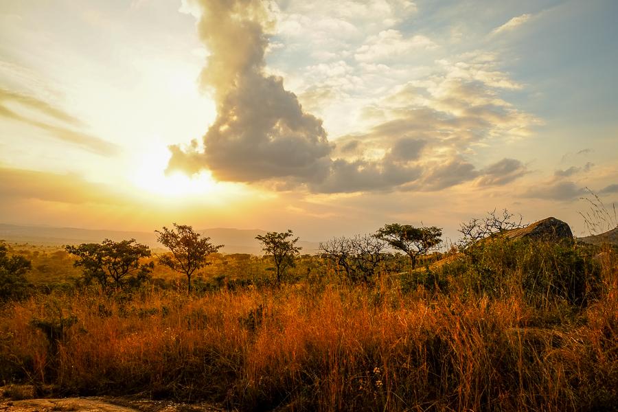 Paysage du soir au parc Kruger, Afrique du Sud.
