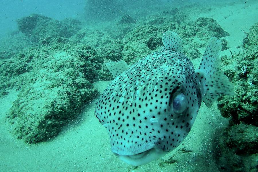 Poisson en snorkeling à Rolas, archipel des Quirimbas, Mozambique.